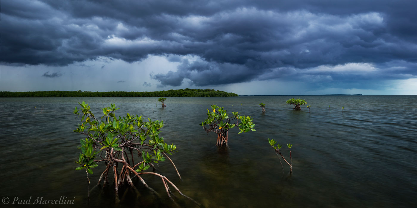cold front, storm, card sound, mangrove, miami, florida, photo