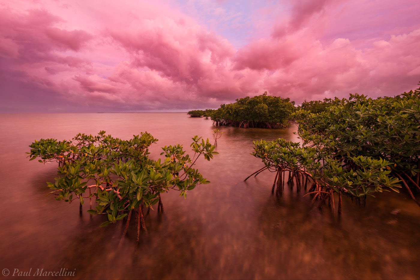 mangrove, stormy, sunset, card sound, miami, florida, photo