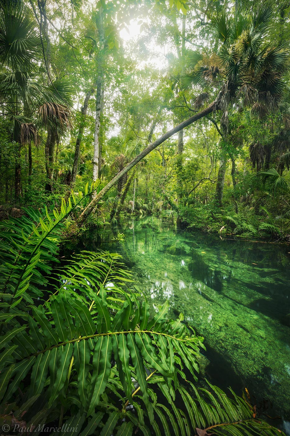 chassahowitzka river, chassahowitzka national wildlife refuge, spring, photo