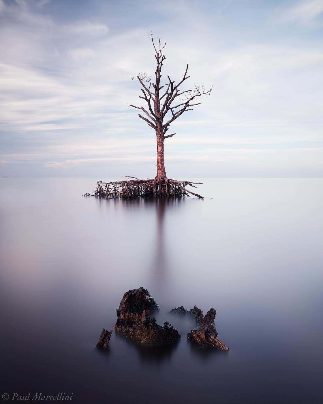 pine, florida, photo