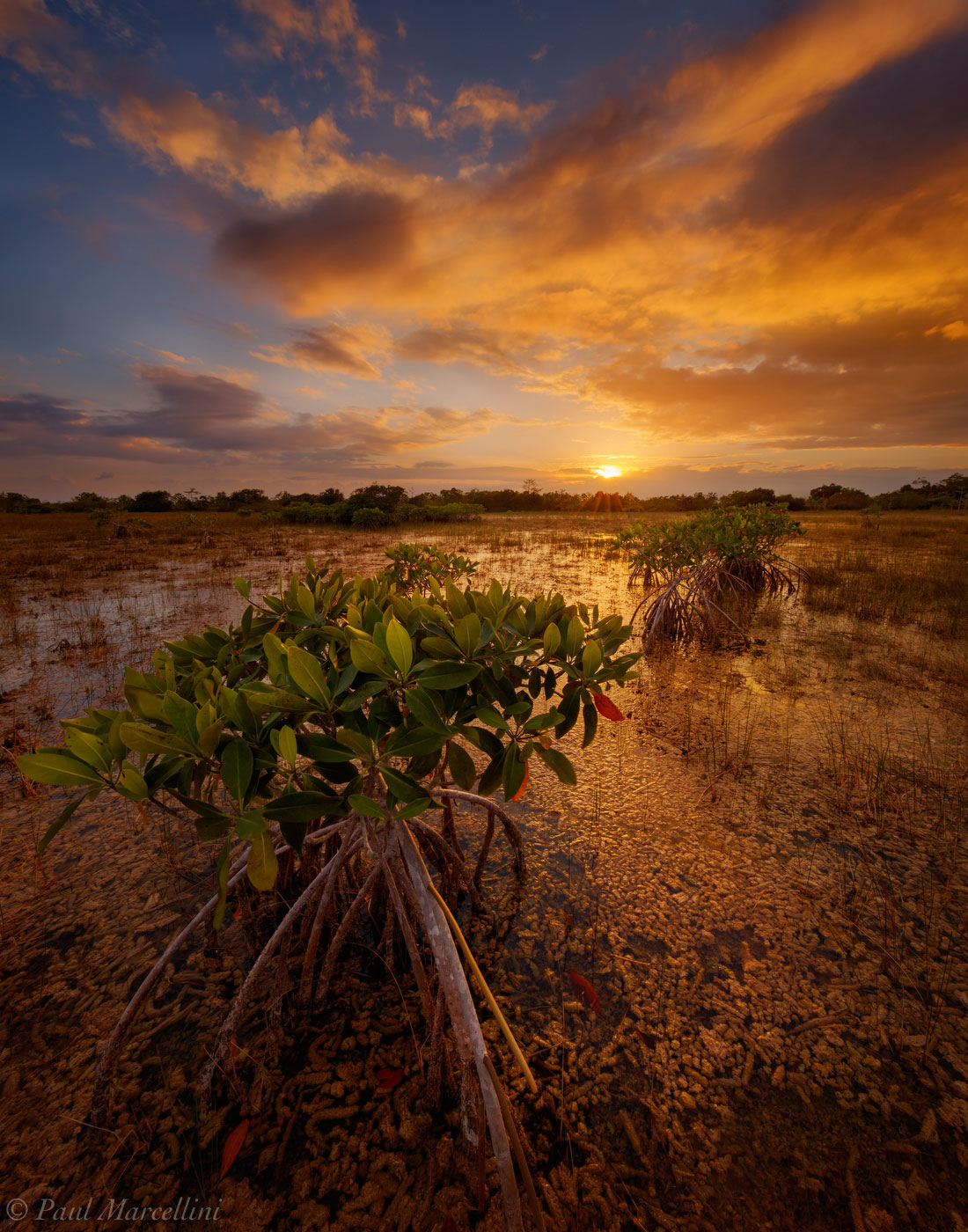 Everglades National Park, Florida, mangroves, photo