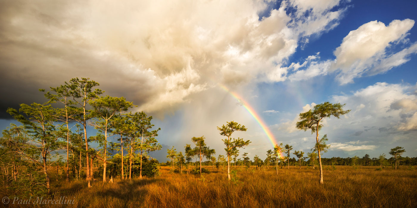 Big Cypress National Preserve, Florida, cypress, rainbow, storm, photo