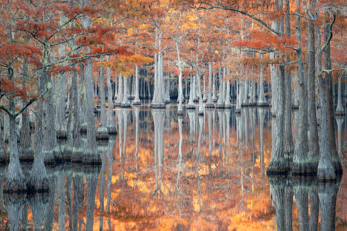 southeast, cypress, fall, photo