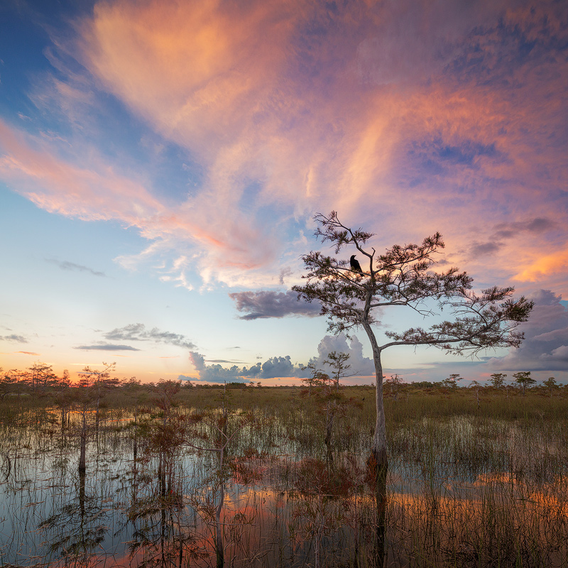 crow, everglades national park, florida, sunset, nature, photography, florida national parks